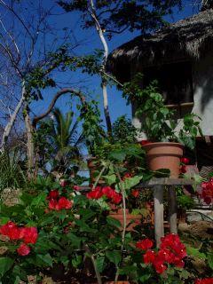 gardenred.jpg